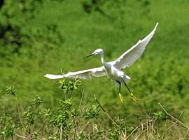 Rezervaţia ornitologică Satchinez