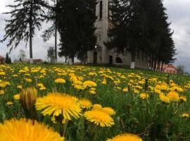 Biserica reformată (calvină)-Dumbrava
